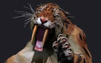 Are You Creating Your Saber Tooth Tigers?